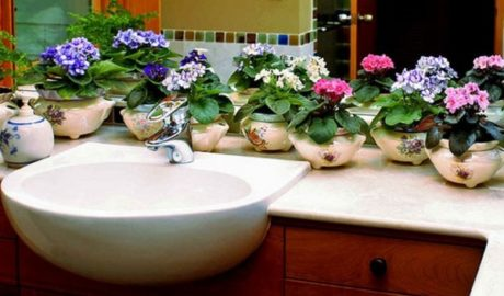 цветы около раковины